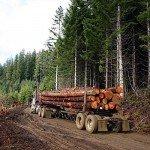 wood-forestry-logging-construction-preferential-legislation-British-Columbia-Ontario-steel-concrete-government-Condo.ca