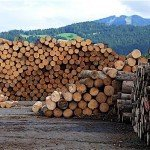 Forestry industry pledges 13 per cent CO2 reduction to fight climate change