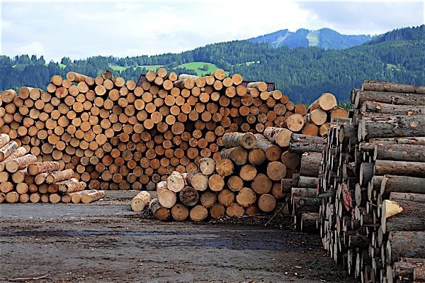 saving the canadian forestry industry The canadian forestry industry is looking for energy-smart solutions to manage wood waste analysis canadian environmental legislation requires sawmills.
