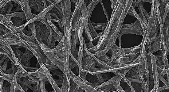 wood fiber Maryland battery sodium ion energy storage nanotube carbon tin electrolyte EDIWeekly