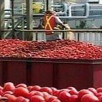 Heinz Leamington Highbury Canco food processing tomatoes ketchup Windsor Chrysler labour union Unifor government EDIWeekly