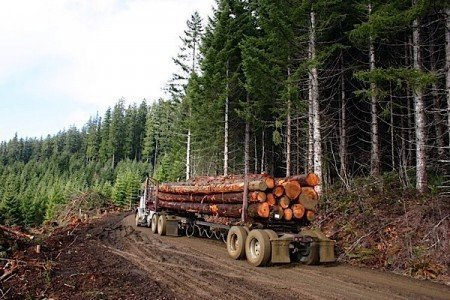 wood forestry logging construction preferential legislation British Columbia Ontario steel concrete government Condo.ca