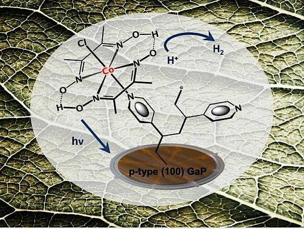 bionic-leaf-Berkeley-Lab-solar-energy-EDIWeekly
