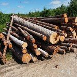 forestry Alberta oil gas energy renewable resources FPAC green sustainable EDIWeekly