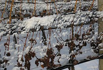 Smart winery? Environmental Health Monitoring Technology to boost plant production; pilot with Ontario winery with Bell in partnership with Huawei