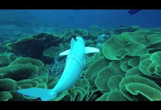 Scientists Create Robotic Fish for Observation of Sea Life in Their Natural Habitats