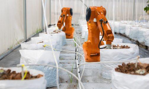 EDI robotic 144243361 1500